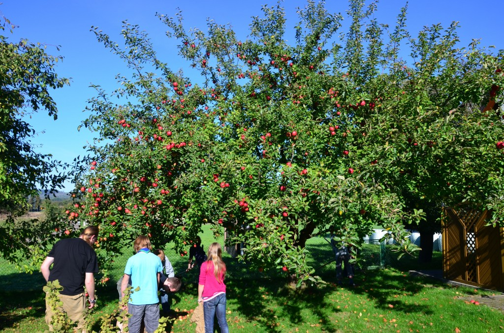 Atze auf dem Apfelsaftlager 2011